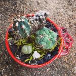 flower-child-plants